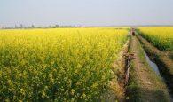 Mơ thấy hoa màu vàng là điềm báo lành hay dữ?